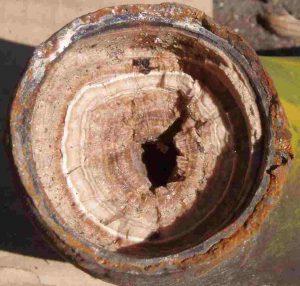Verkalktes Rohr mit Jahresringen