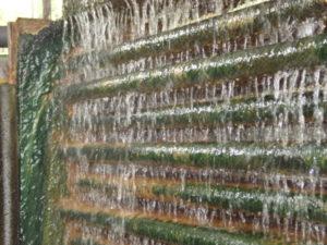 Algen im Kühlwasser