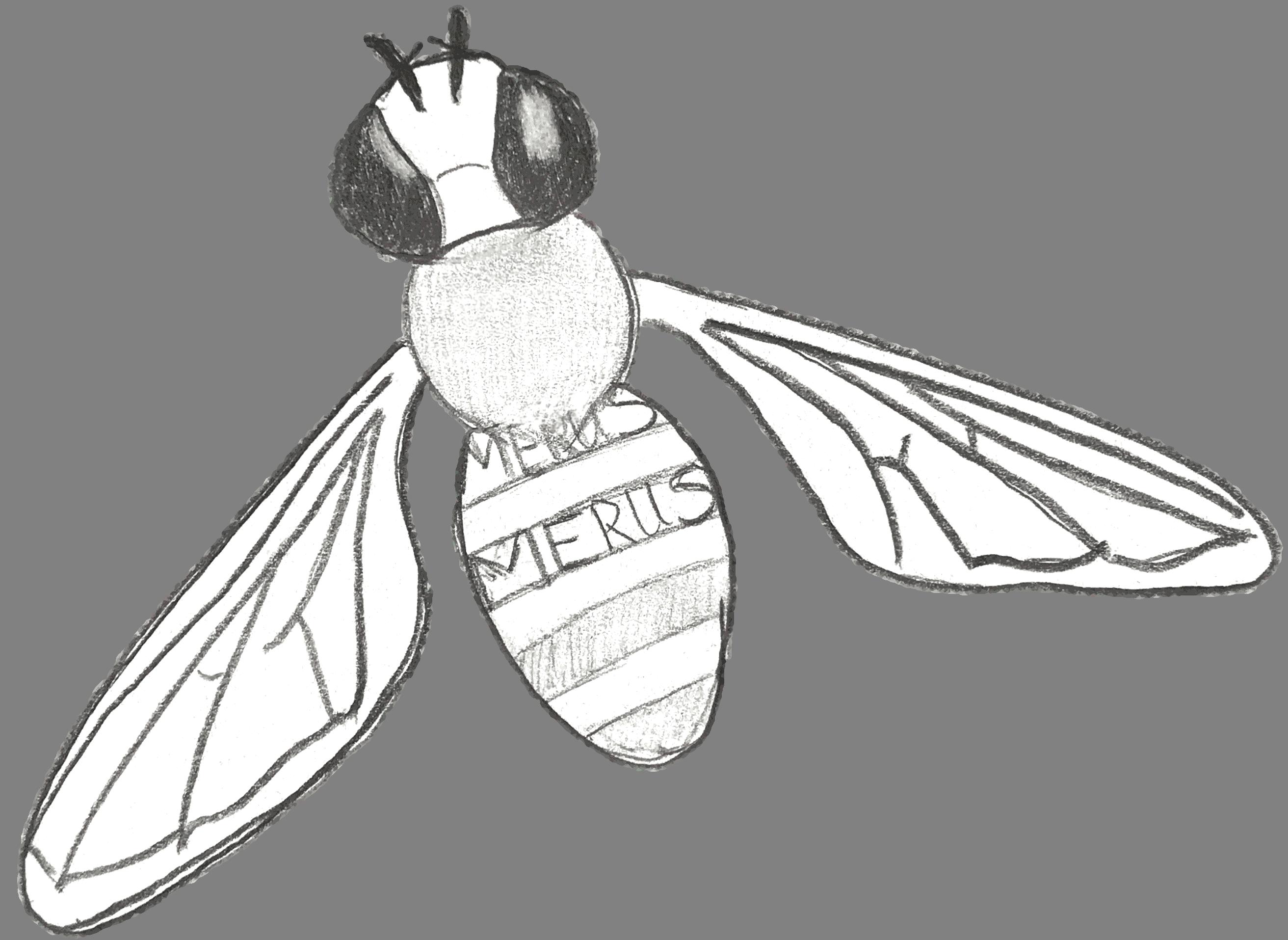 Bienen Merus