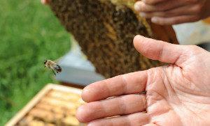 Bienen Starthilfe geben